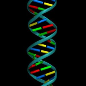 DNA-double-helix-image-1
